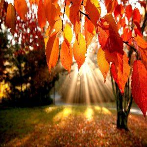 رنگ نارنجی در طبیعت
